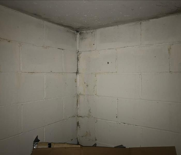 mold growing on brick basement wall